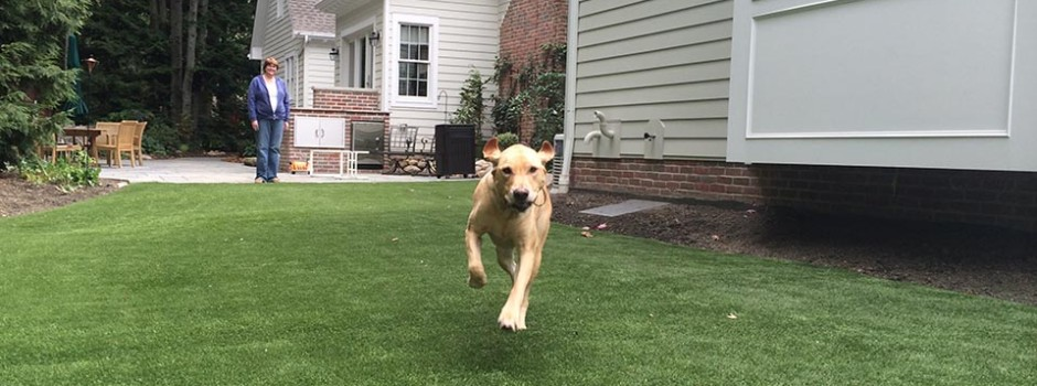 dog-slider2