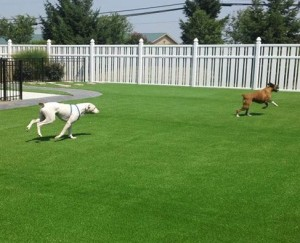 Pet Turf Ohio
